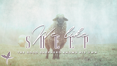 We, Like Sheep: The Good Father Knows His Own